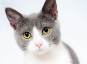 Jak koty widzą świat?