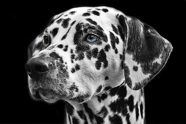 Rasy psów, które są godne uwagi