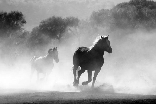 Co warto wiedzieć o koniach?