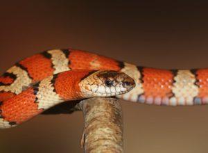 Jak pielęgnować węża?