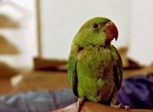 Jak opiekować się papugą?