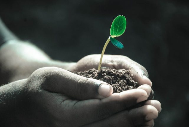 Jak stosować ukorzeniacz do roślin?