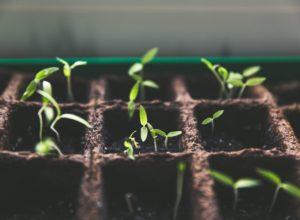 Nawożenie roślin – jak uniknąć błędów?
