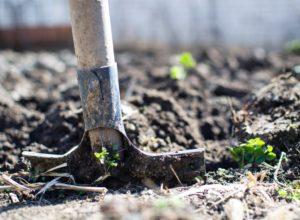Czy warto stosować obornik w ogrodzie?