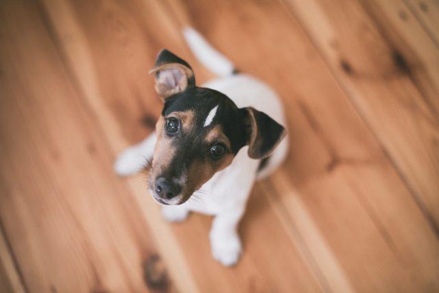 Fazy rozwoju psa