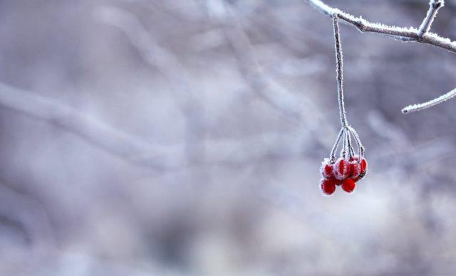 Zabezpiecz rośliny przed zimą