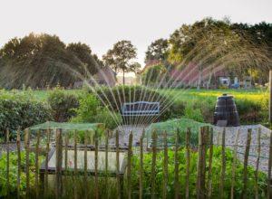 Woda w ogrodzie, czyli jaki system nawadniania wybrać?