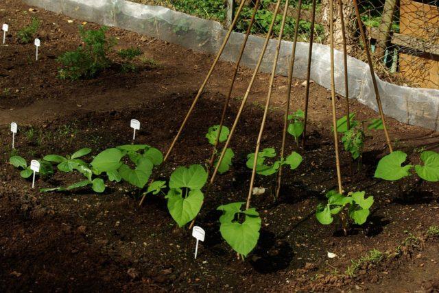 Bądź eko z wapnem ekologicznym
