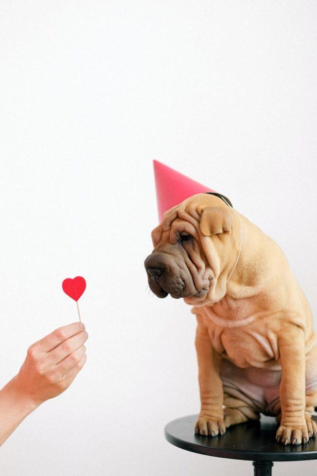 Jakie akcesoria będą najlepsze dla psa?